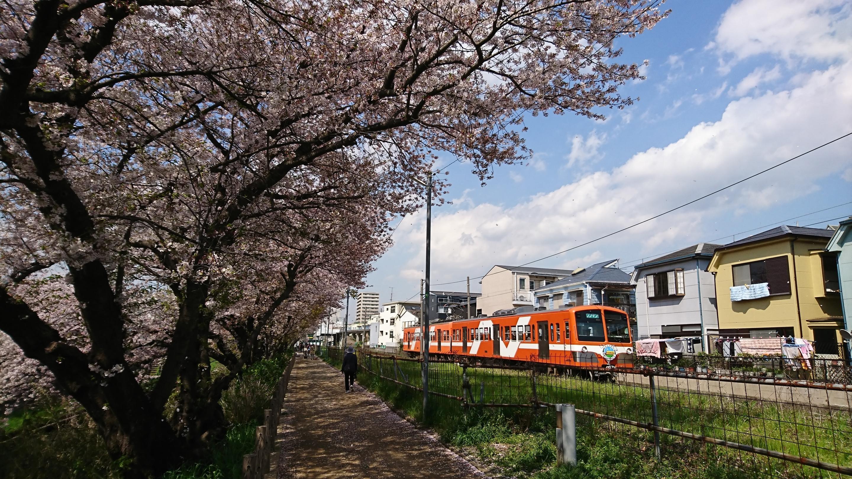 流鉄流山線と桜